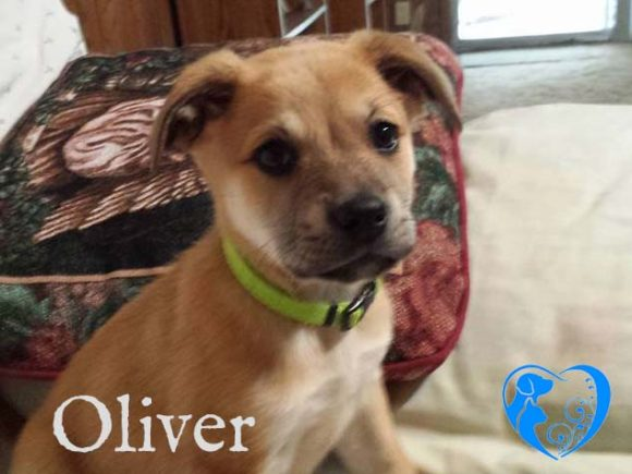 Oliver – Adopted!