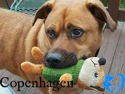 Copenhagen – Adopted!