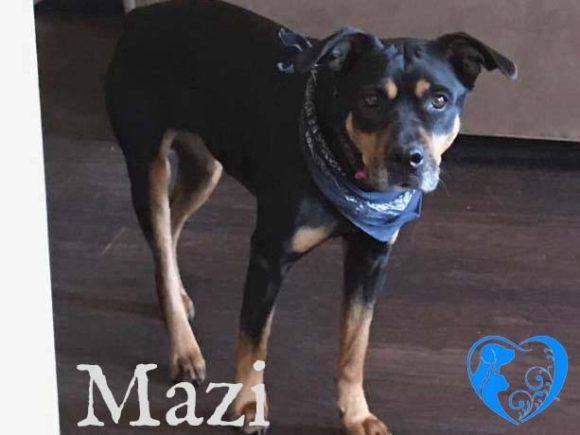 Mazi – Available