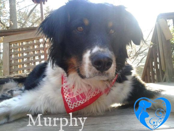 Murphy – Adopted!