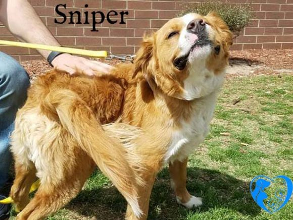 Sniper – Adopted!