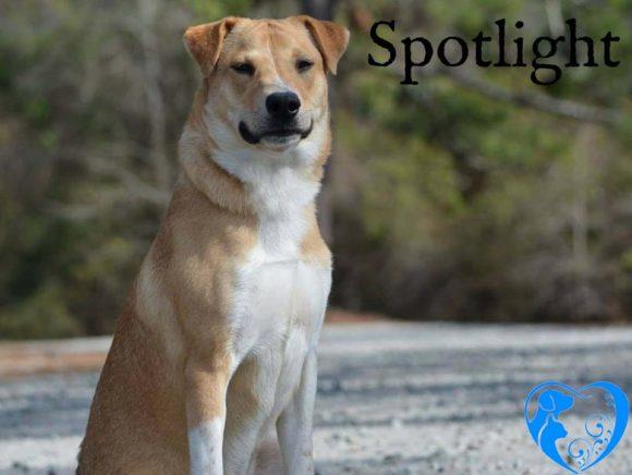 Spotlight – Available