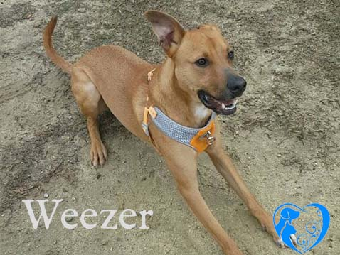 Weezer – Adopted!