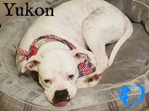 Yukon – Adopted!!