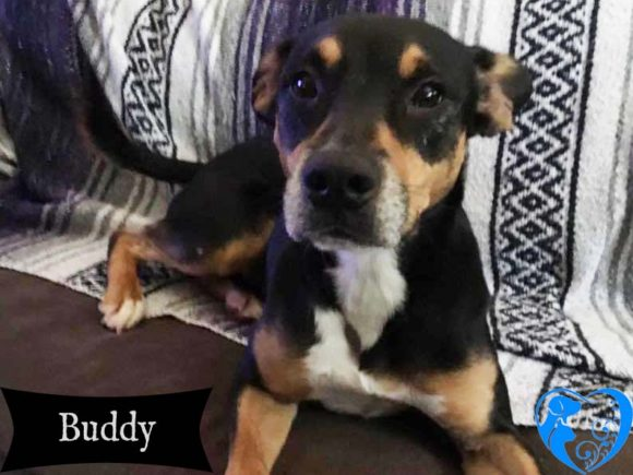 Buddy – Available