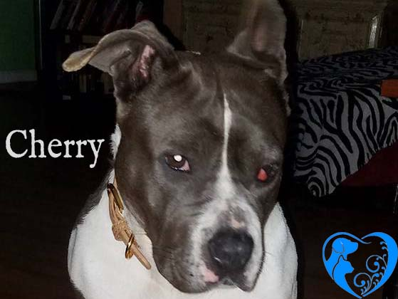Cherry – Available