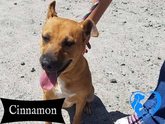 Cinnamon – Adopted!