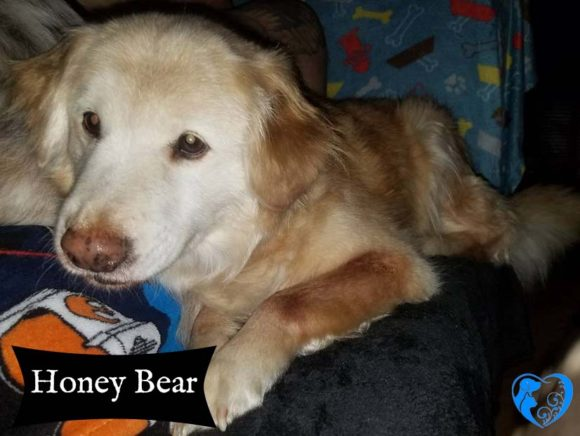Honey Bear – Adopted!
