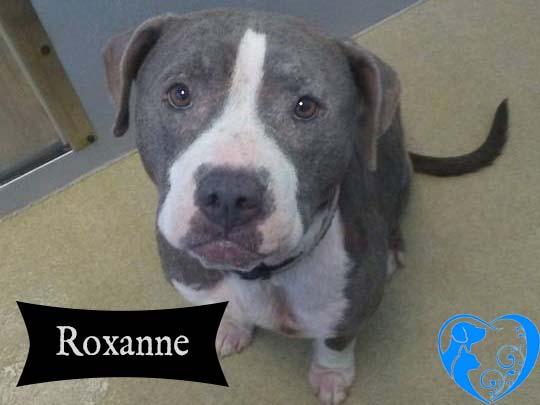 Roxanne – Available