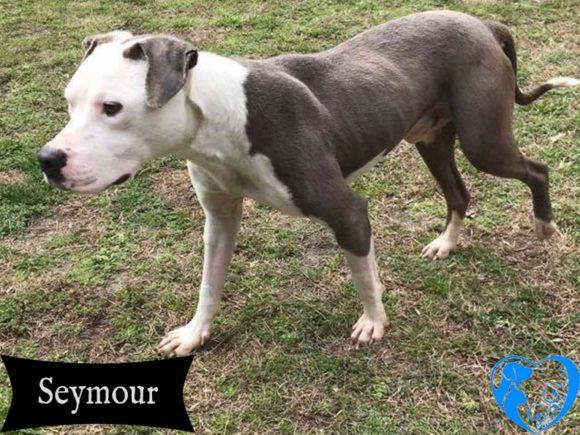 Seymour – Adopted!
