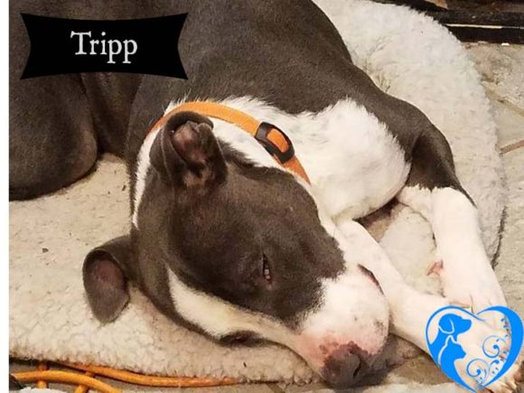 Tripp – Adopted!